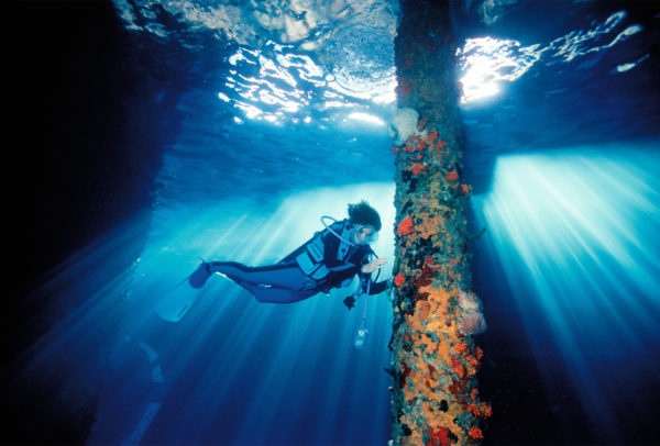 Sylvia Earle, Témoignage Rolex depuis 1982, en plongée.