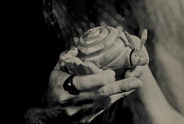 Cochlea Shell