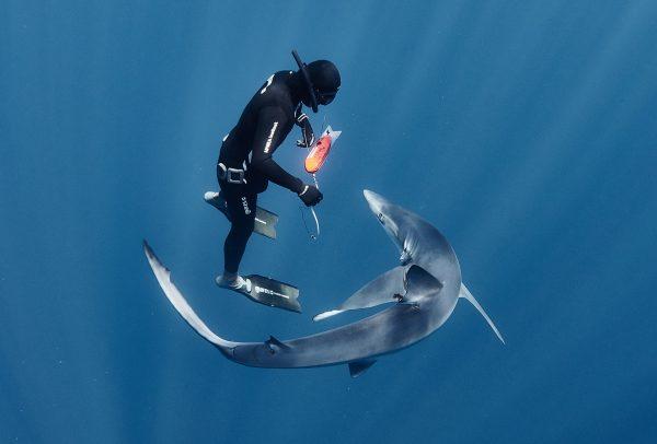 Balisage des requins © Ulysse Nardin