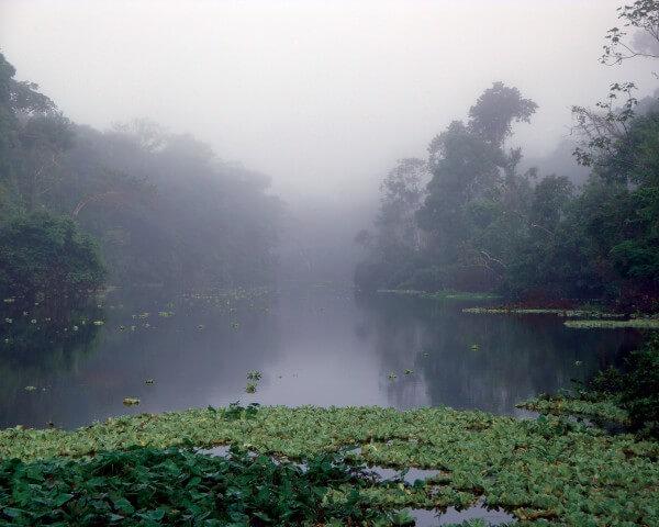 1-ap-fondation-amazonie